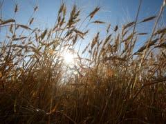 Aktien aus dem Agrarsektor sind reif für ein Investment